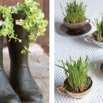 unique designed apartment interior herb garden idea on black boots and white small cups