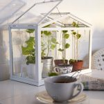 unique interior herb garden idea for apartment with glass artificial house made of glass on white table aside  a white cup
