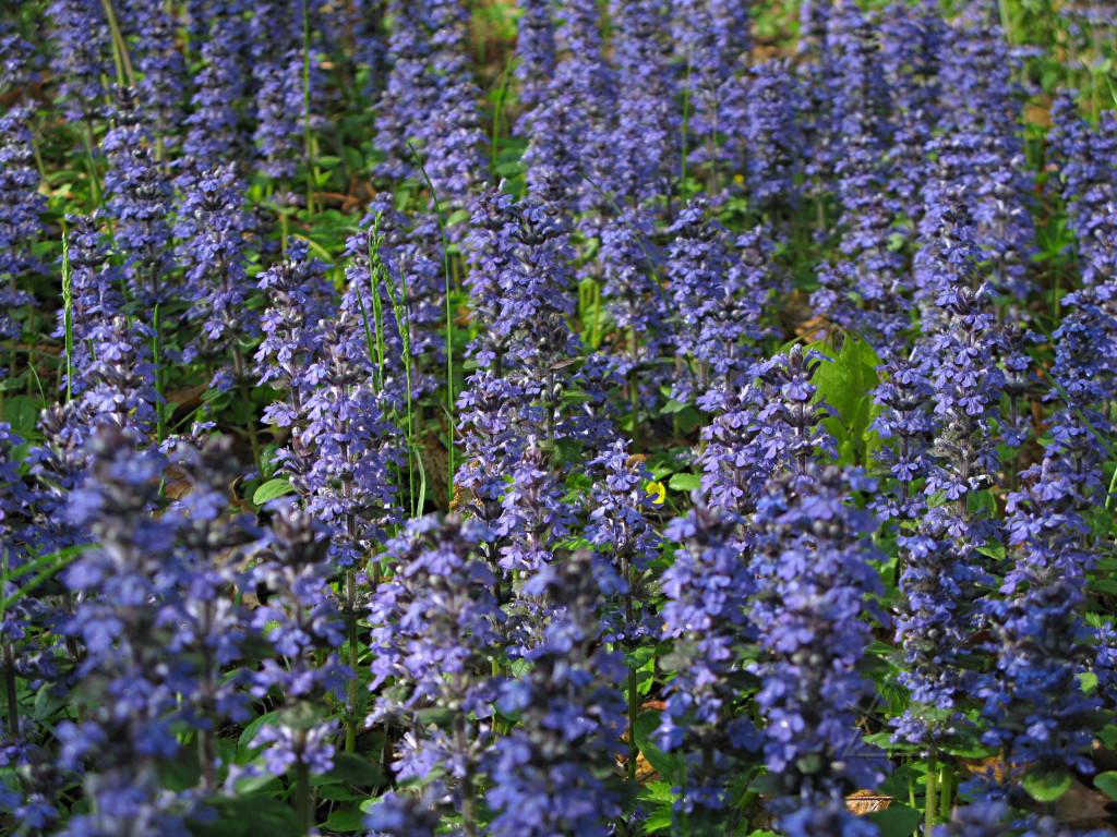 Some Beautiful Color Low Growing Flowers That You Must Add