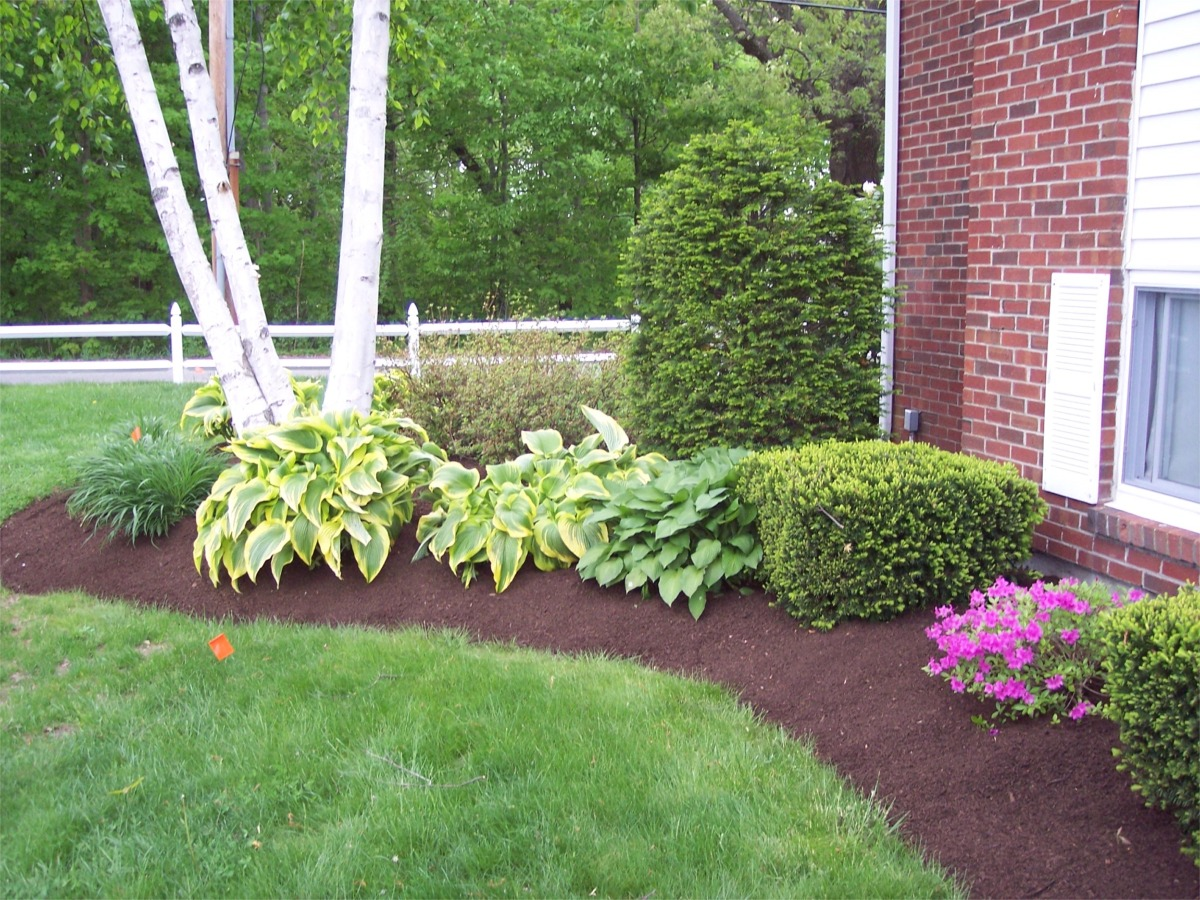 Learn the good ideas to apply best mulch for landscaping for Landscape trees