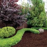 unique shaped shrub on brown best mulch for landscaping design in brown color with pine tree and purple tree