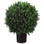 wondrous single black boxwood topiary ball design for interior garden
