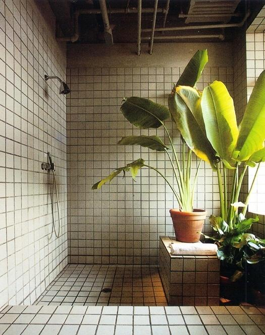 Tall House Plants tall house plants for indoor: the most recommended ones | homesfeed