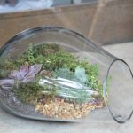 Awesome Shape of Terrarium Glass