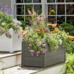 Beautiful Flower With Boxes Outdoor Plants