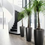 Black elegant giant pots for tall indoor plants