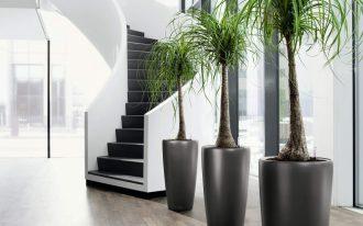 Black elegant giant pots for tall indoor plants