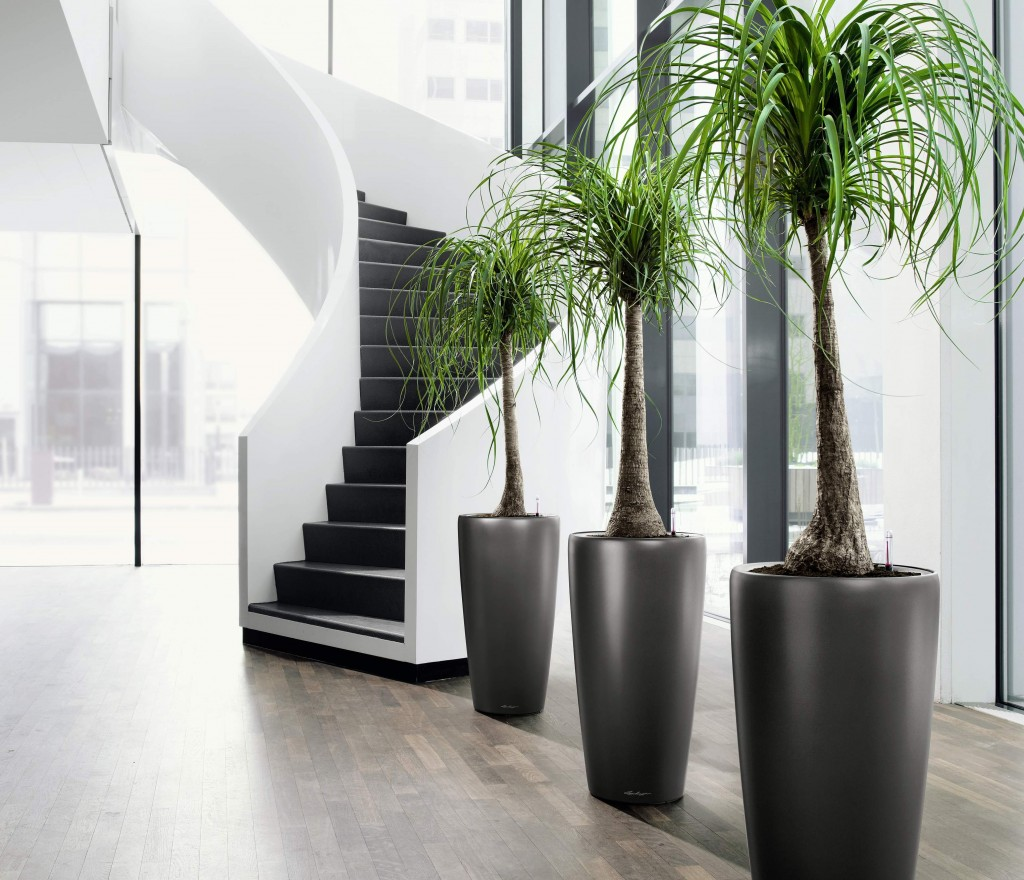 black elegant giant pots for tall indoor plants - Tall House Plants