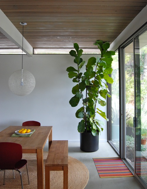 Tall house plants for indoor the most recommended ones Interior design plants inside house