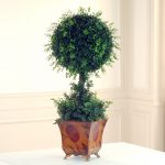 Cool Boxwood Topiary In White Table And Room