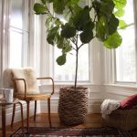 Creative rattan pot for tall house plant a corner chair with shaggy cushion back small round wooden side table global rug idea