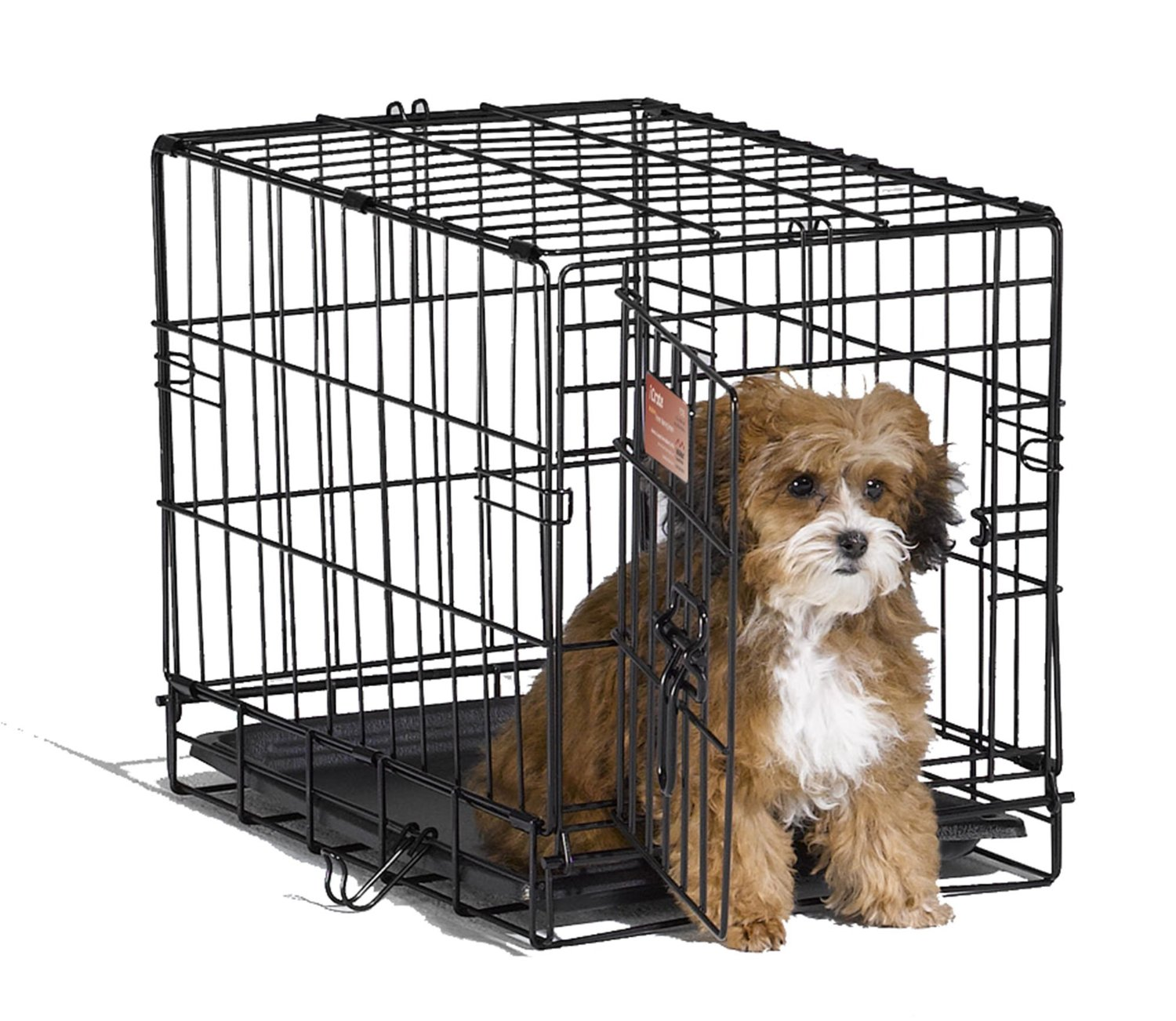 Dog And Its Dog Crate