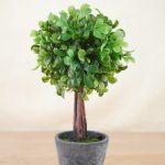 Fresh Boxwood Topiary
