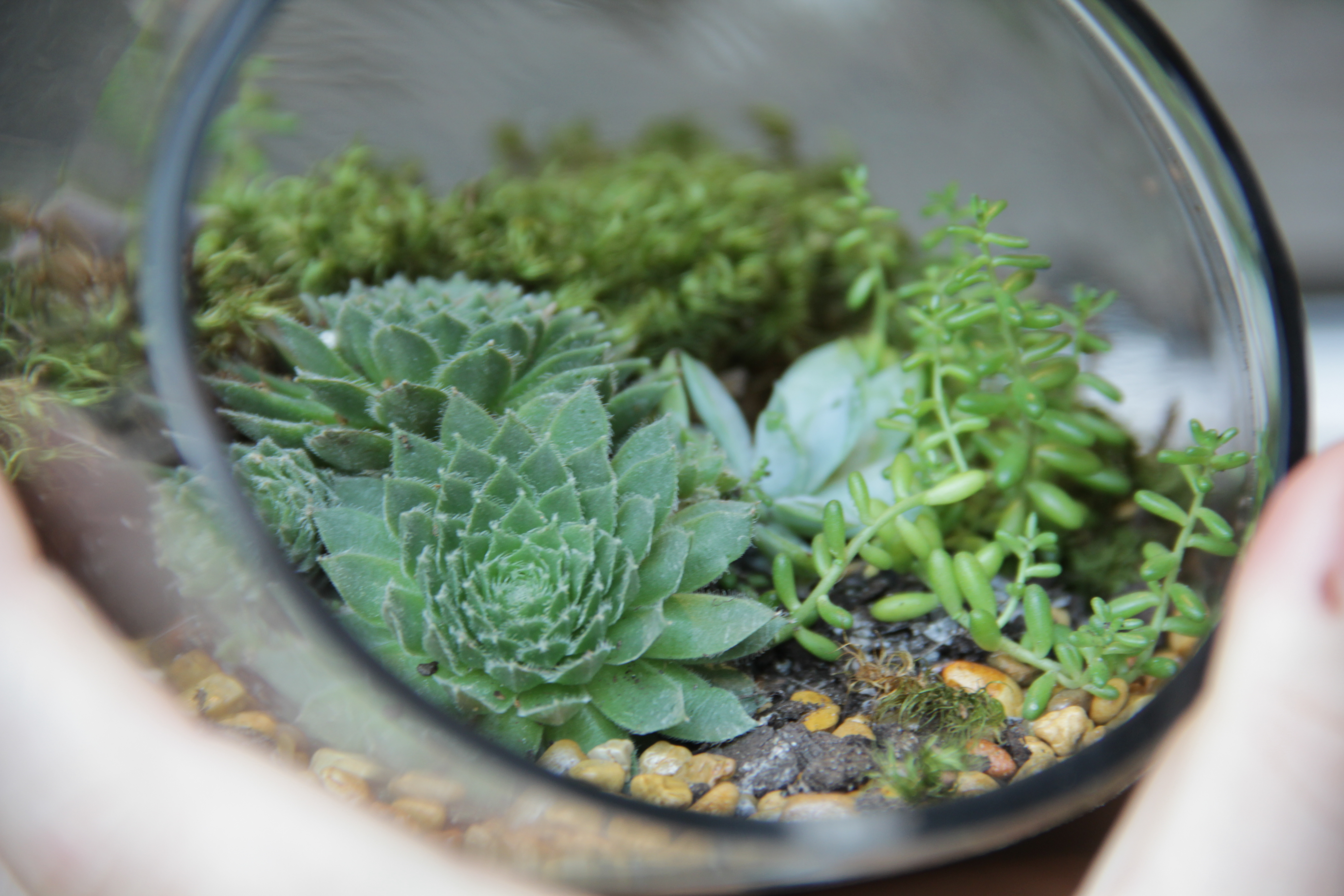 Glass Terrarium Containers Homesfeed