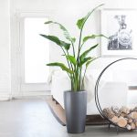 Glossy black pot for tall ornamental plant for indoor