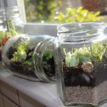 Jar Glass Of Terrarium With Freah Plants Near Window