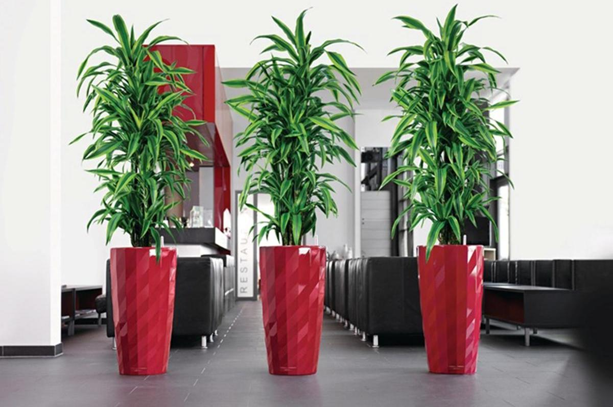 Tall House Plants for Indoor: The Most Recommended Ones | HomesFeed