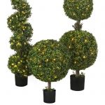 Three Types Of Boxwood Topiary In Black Pot