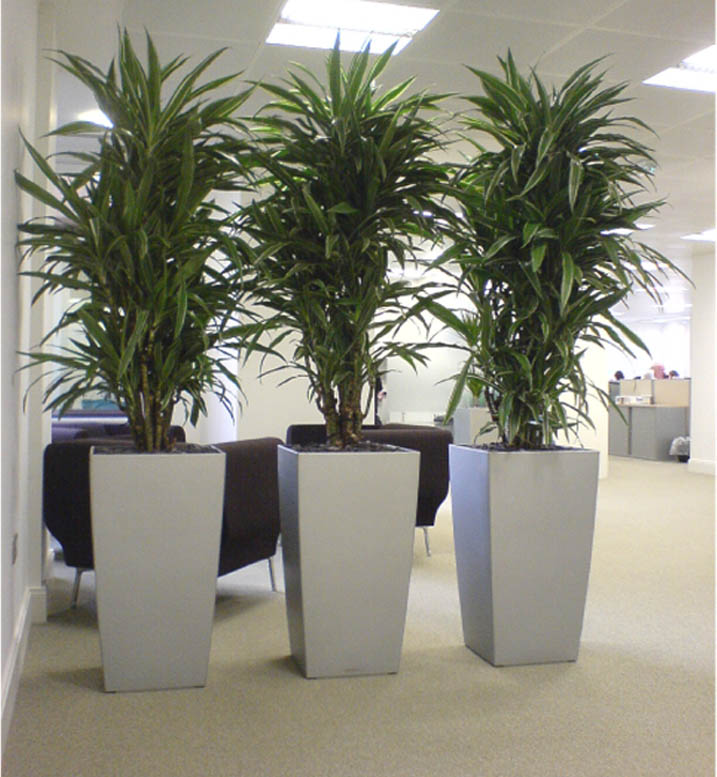microsoft word presenterdoc - Tall Flowering House Plants