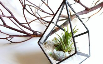 Unique Shaped Of Terrarium Glass
