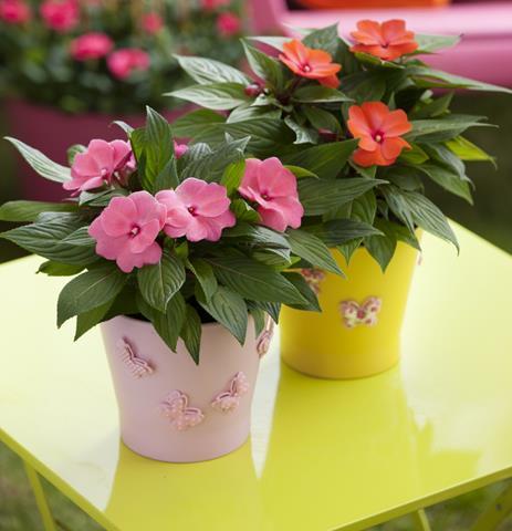 Unique indoor plants for fresh interior homesfeed Colorful pots for indoor plants