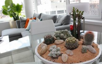 adorable indoor plants idea on white pot with sand and shell and gray sofa and potted plant and glass window and white coffee table
