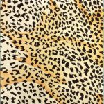 awesome cheetah print rugs bringing gorgeous vibes in home decorating ideas
