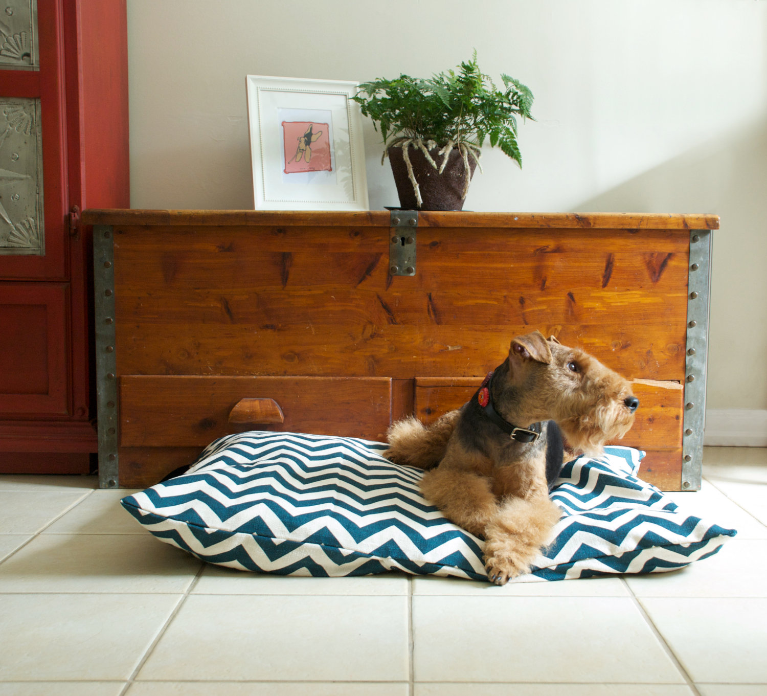 stylish pet beds luxury half moon pet bed limited edition pet  - stylish dog beds for your lovely dogs homesfeed