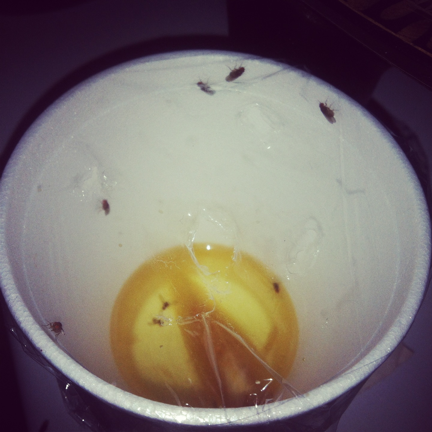 Make Your Own Fruit Flies Trap To Get Rid Of The Annoying