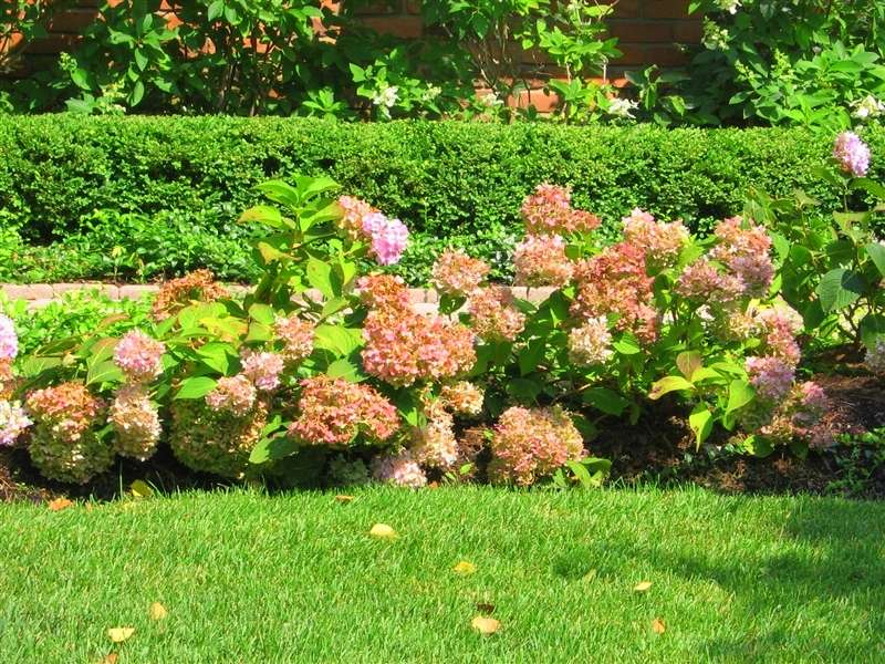 How to sweet your home garden with endless summer for Garden designs with hydrangeas