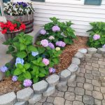 Simple Home Garden Design With Paved Patio And Wooden Basket And Endless Summer Hydrangeas