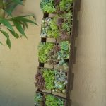 Adorable Vertical Succulent Planter Idea With Standing Wooden Racks Beneath White Wall With Indoor Plant