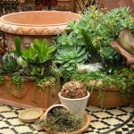 Stunning Indoor Decoration Idea With Patterned Area Rug And Succulent Planter Idea With Shrub And Potted Plants