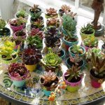wonderful succulent planter idea with giant plate and some colorful small pottery for colorful plants