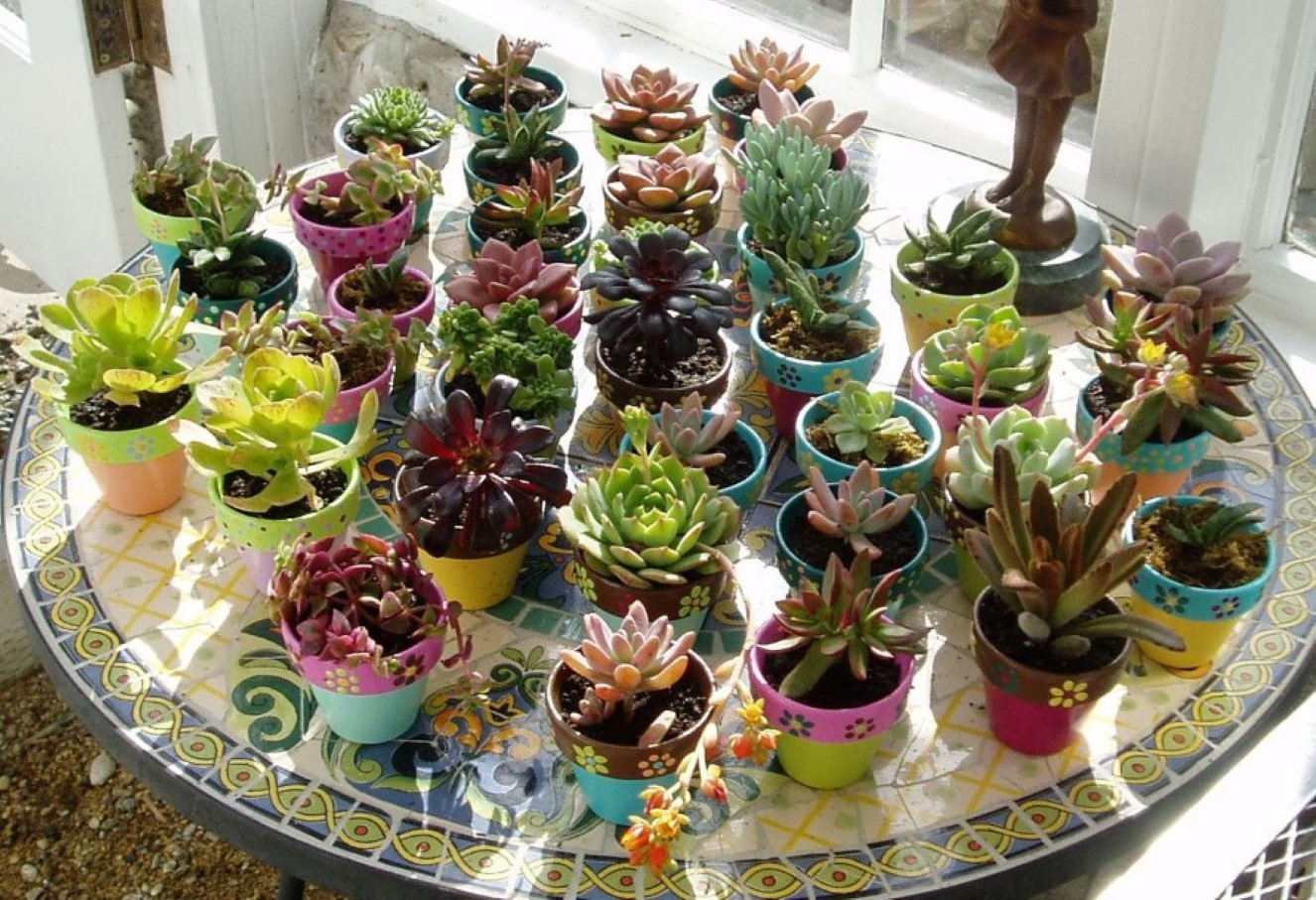 Succulent planter to make awesome indoor garden homesfeed Colorful pots for indoor plants