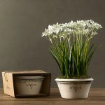 Beautiful white paper bulbs on white interior pot