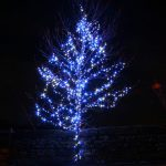 Blue And White Christmas Lights On Outdoor Tree