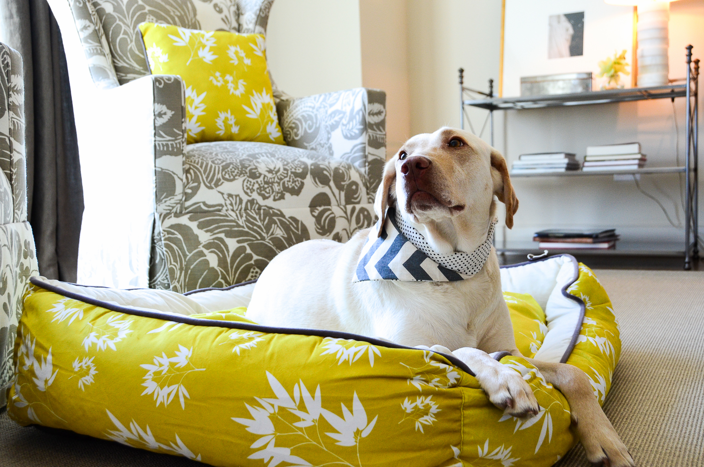 stylish pet beds luxury half moon pet bed limited edition pet  - stylish pet beds