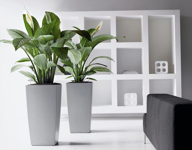 Fresh Home Design with Cool and Fresh Indoor Plants | HomesFeed