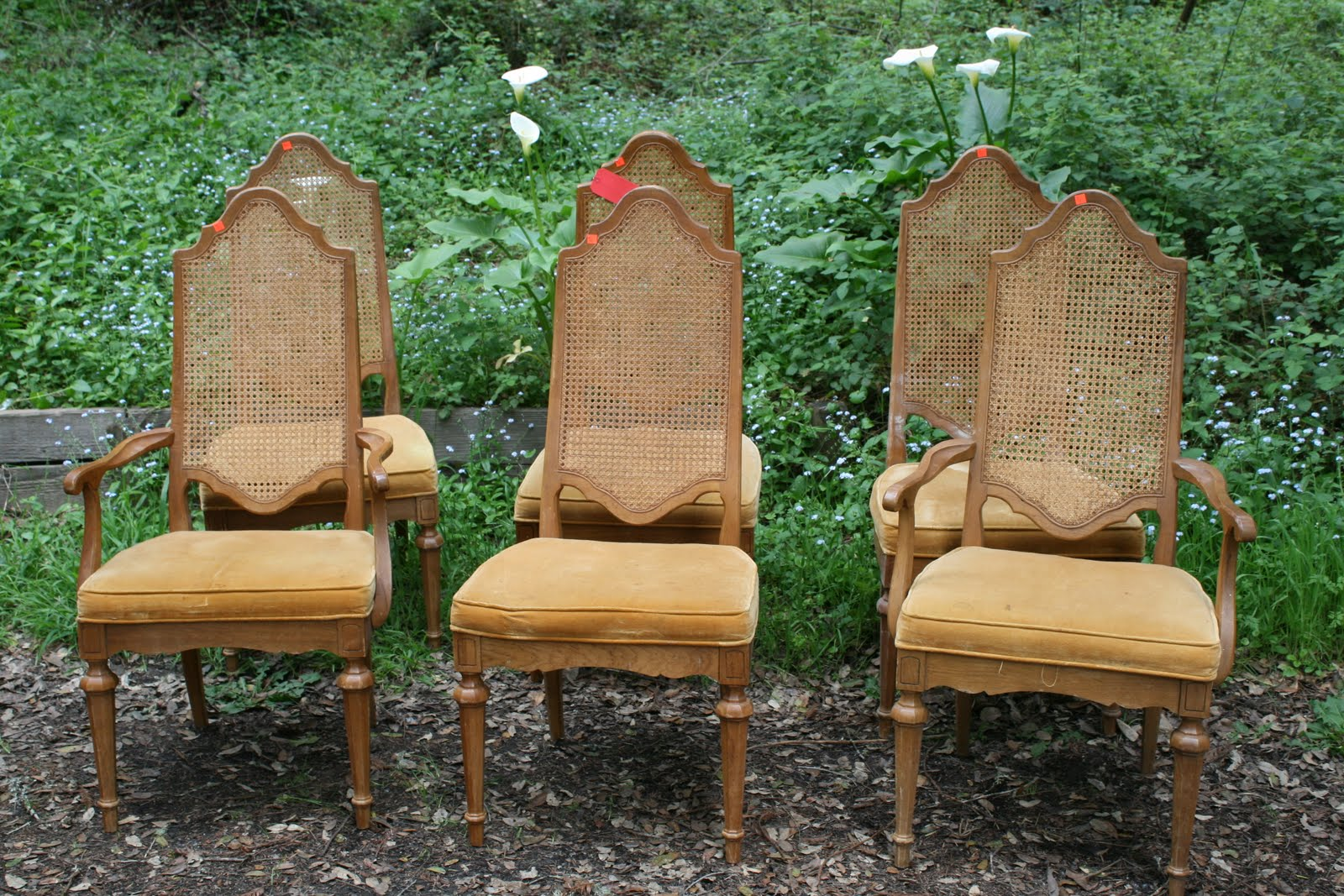 Traditional Cane Back Dining Chair With Arm And Armless Design Together  With Light Brown Upholstery For