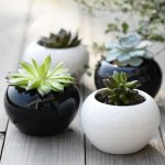 Black and white pots with best potting soil for interior plants