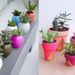 Colorful interior pots with small interior plants and best potting soils