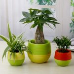 Decorative plants for interior with beautiful pots
