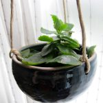 Gorgeous black hanging pot with green plant