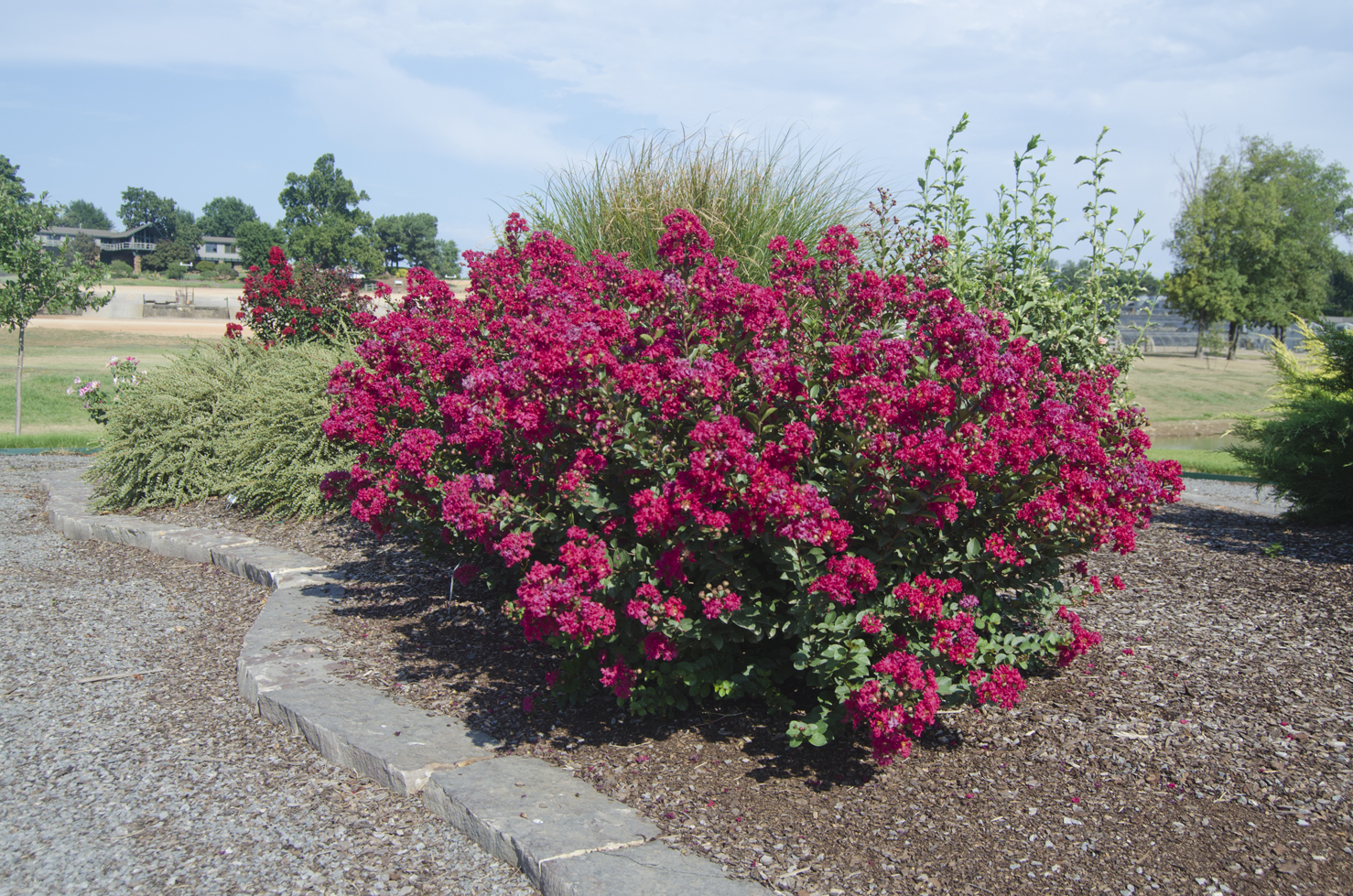 Beautiful large flowering bushes homesfeed for Large bushes for landscaping