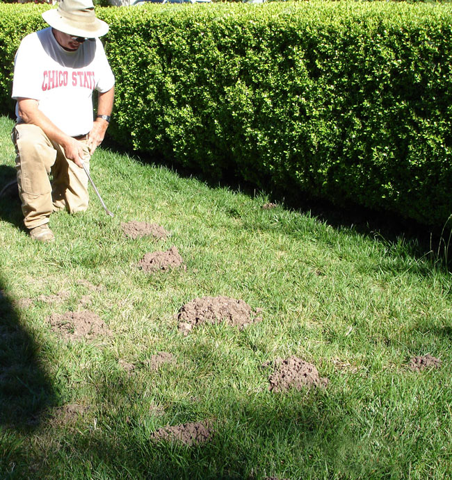 Gopher In Backyard: How Getting Rid Of Moles In Gardens Or Yards?