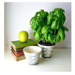 Simple white pots in small size with potting soil and green plus fresh plant