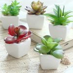 White ceramic pots in small size for interior garden