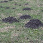 more ground volcanos made by moles