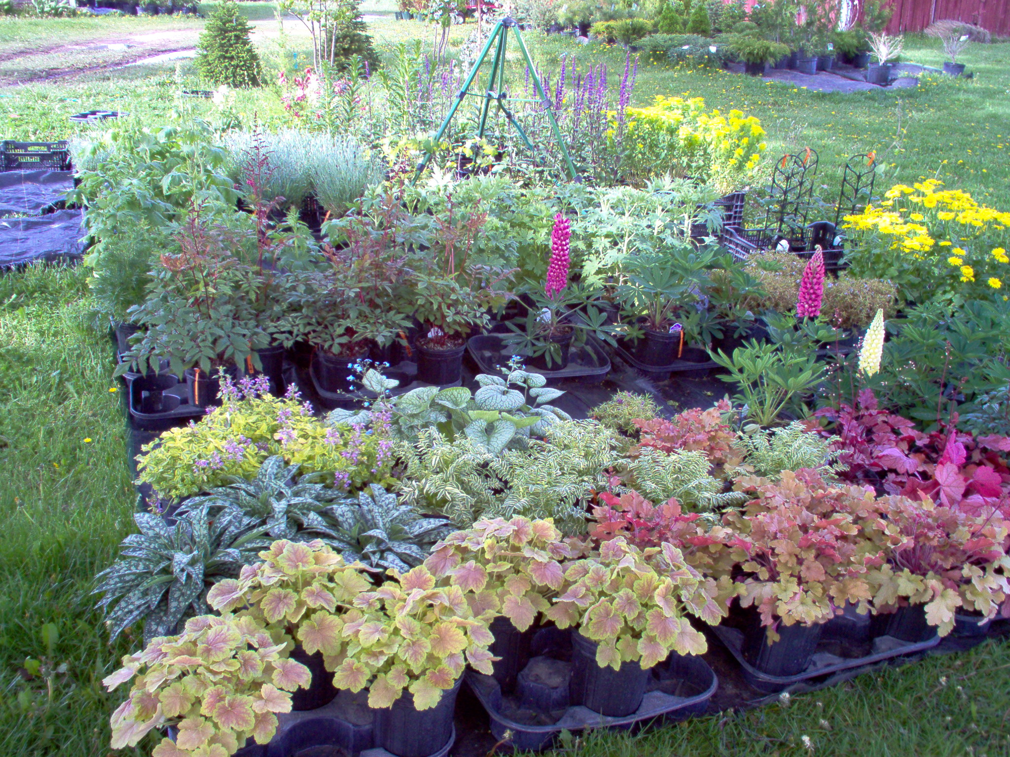 Natural Perennial Plants for Shade